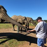precious elephants