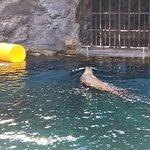 Photo de Mystic Aquarium