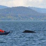 Zodiac next to a Humpback Whale