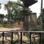 Melbourne Zoo Foto