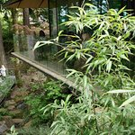 Photo of Portland Japanese Garden