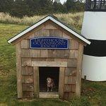 dog lighthouse