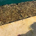 Meeresorgel Foto