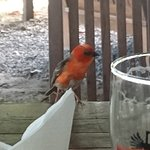 Bird at our table
