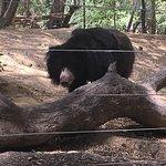 WildlifeSOS rescued sloth bear