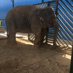 On of 20 happy rescued elephants we saw
