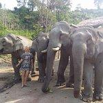 自然和野生動物遊覽