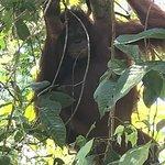 Photo of Sepilok Orangutan Sanctuary