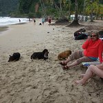 New and old friends at the beach; the dogs are calm, a dog lover would like to adopt.
