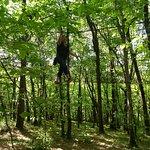 le filet dans les arbres