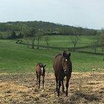 Foto van Taylor Made Farm