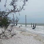 Bunche Beach의 사진