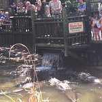 St. Augustine Alligator Farm Zoological Park Foto