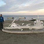 Magdalena Bay Whales Resmi