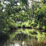 Solar Whisper Daintree River Wildlife Cruises Φωτογραφία