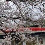 Nakabashi Bridge with Cherry Blossum