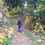 Hanmer Forestの写真