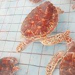 ภาพถ่ายของ ศูนย์อนุรักษ์พันธุ์เต่าทะเล ฐานทัพเรือพังงา