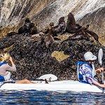 Seal and kayaker interaction