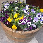 Abbiamo piantine di salvia,erba cipollina,rosmarino,luminaria poi un po' di bei fiori X addobbo