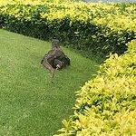 Foto di Thai Country Club