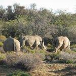 Photo of Inverdoorn Game Reserve Safaris