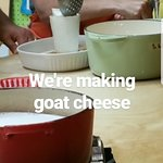 In process of transferring goat cheese into their molds