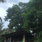 Foto de Charlie's Jungle House