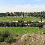 Looking from the Palatine Hill