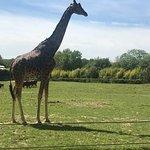 Photo of Parc Zoologique Cerza