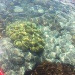 ภาพถ่ายของ Sea Kayak Adventure Paddle