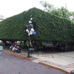 Photo of Jardin de la Union