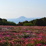 Photo of Nokonoshima Island