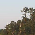 Foto de Cap'n Rod's Lowcountry Plantation Tours