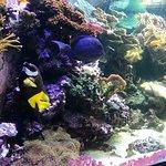 SEA LIFE London Aquarium Photo