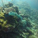underwater pics