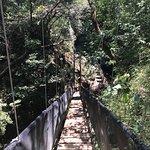 Foto de Jacamar Naturalist Tours