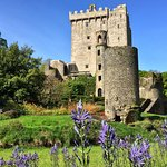 Blarney Castle and Gardens