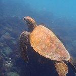 Incredible Sea Turtles.