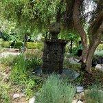 聖安東尼奧植物園照片