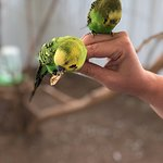 Feeding the budgies at the first tour stop!