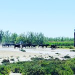 Photo of Domaine Paul Ricard Mejanes en Camargue