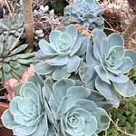 CACTUS AND SUCCULANTS