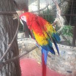 Foto de Los Veranos Canopy Tour
