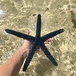 Blue Starfish and Million Dollar Point