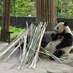 Visits the panda