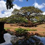 Photo de Honolulu Zoo