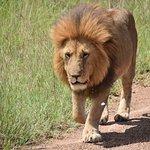 Foto di Lion Trails Safaris - Day Tours