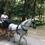 Horse & Carriage Tour照片