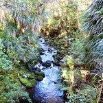 Foto de AH Reed Kauri Park